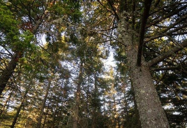 floresta_murca_